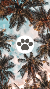 Story template by @ilse.zwart palmtree Travel airplane passport traveblogger blogger music animal pets dogs cats